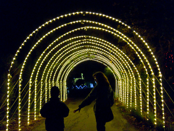 oakland zoo, zoolights, tunnel of light