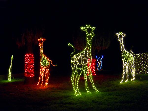 oakland zoo, zoolights giraffes