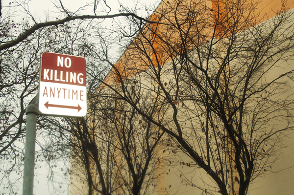oakland graffiti, no killing signs
