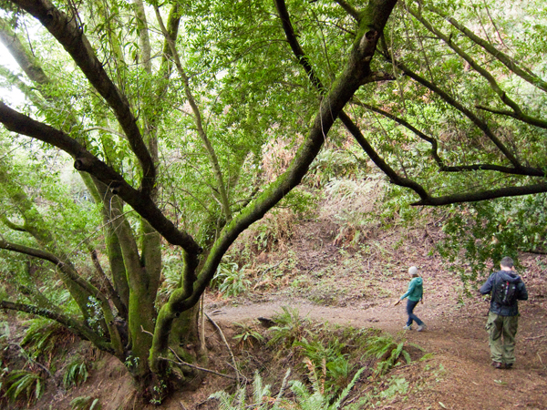 oakland hiking, huckleberry botanic preserve