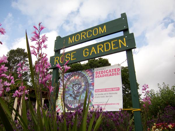 oakland rose garden, morcom rose garden, dedicated deadheaders