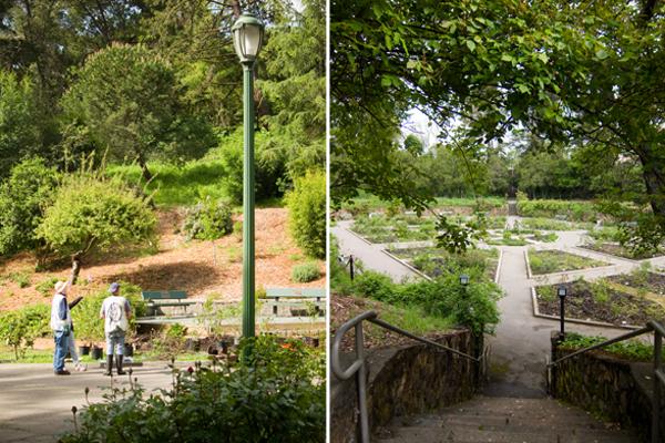 dedicated deadheaders, morcom rose garden volunteers, morcom rose garden