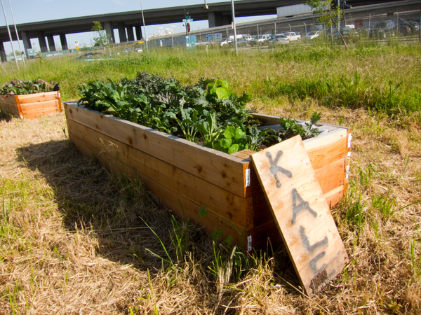 mo' better food, west oakland garden, kijiji grows