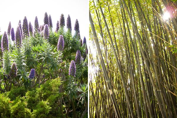 bamboo stand, kaiser roof garden
