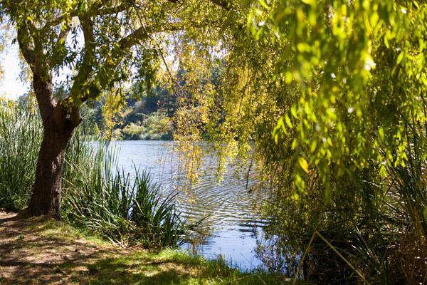 oakland summer swimming spots, Temescal Park