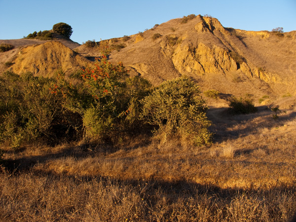 sibley regional volcanic preserve, round top, east bay hiking trails