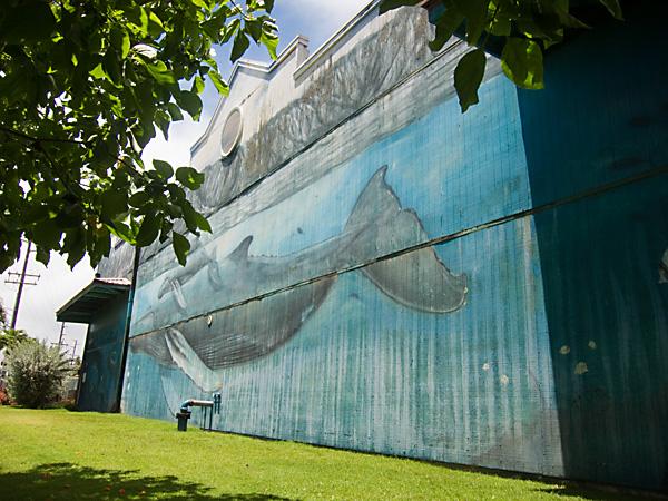 whaling wall, humpback whale mural, kauai village mural