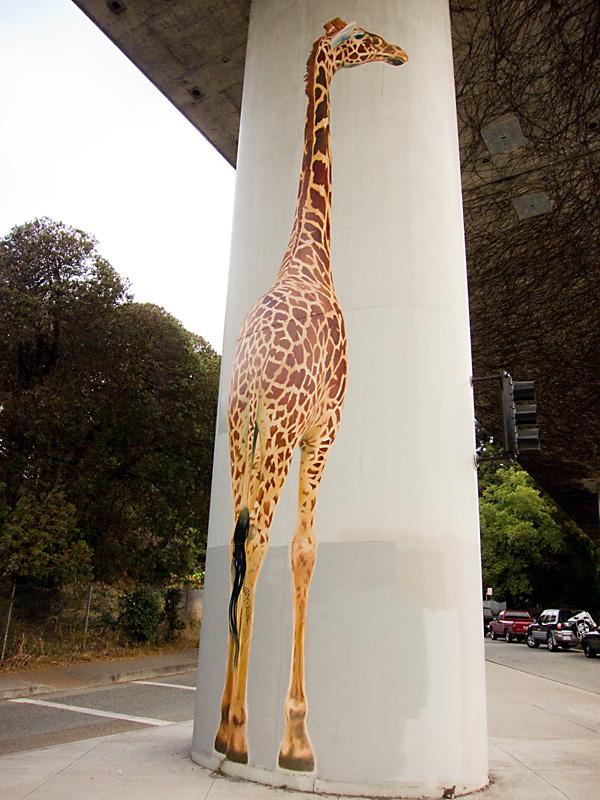 580 freeway giraffes, giraffes by dan fontes