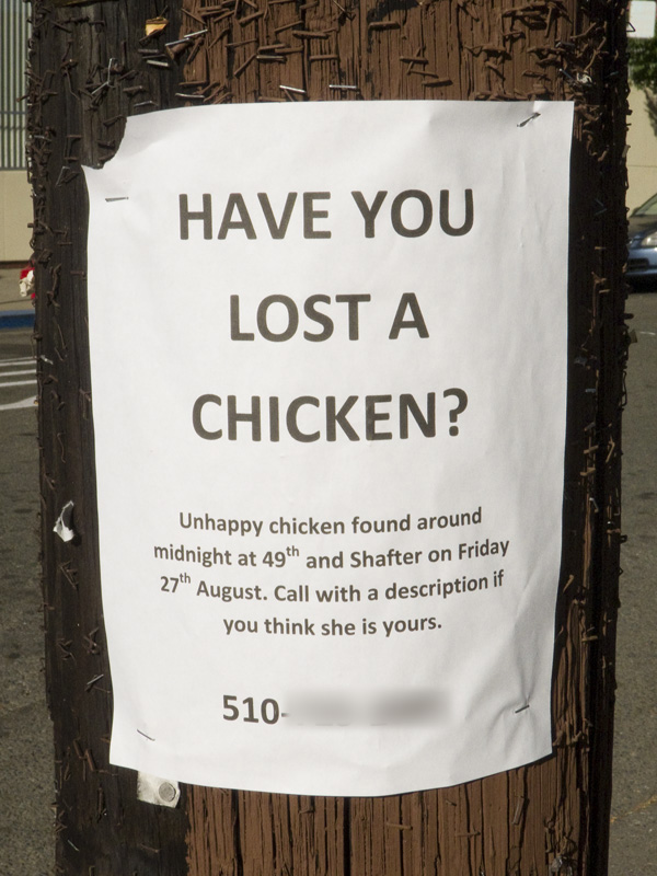 lost chicken, unhappy chicken, funny lost pet signs, unusual lost pet signs