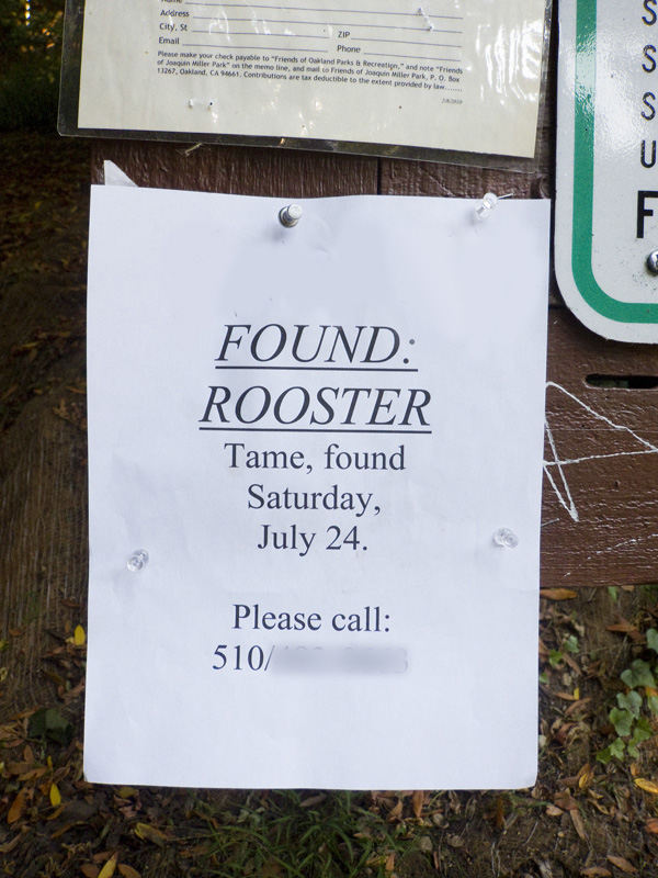 unusual lost pet signs, unusual found pet signs
