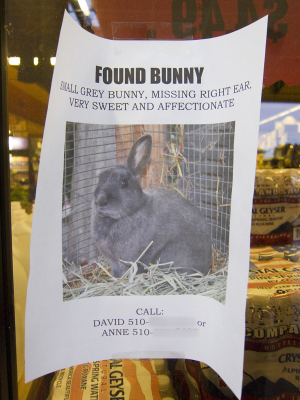 unusual pet signs, funny lost pet signs, bunny missing ear