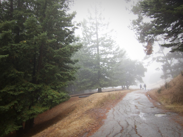 rainy day walking, oakland hills fog, joaquin miller park, trails in joaquin miller