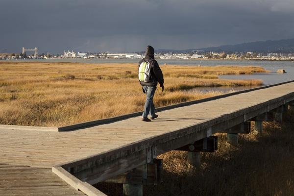 MLK Jr. Regional Shoreline, east bay birdwatching spots