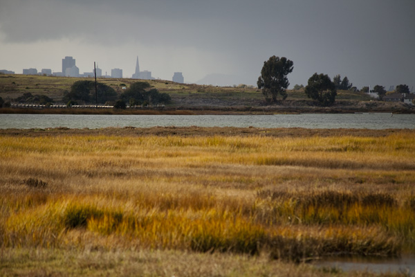 East Bay Shoreline Park, East Bay Wetlands Restoration, Oakland Parks