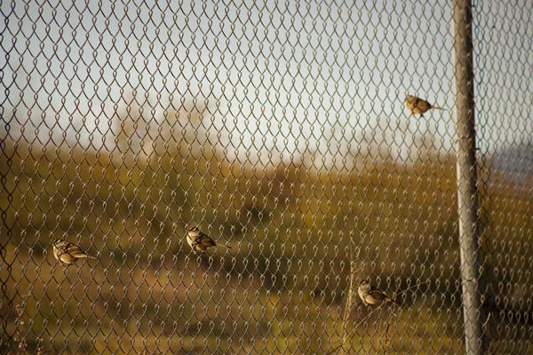 oakland bird watching spots, east bay bird watching spots