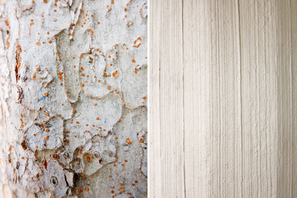 white textures, flaky bark, shades of gray, abstract photography, photos of white